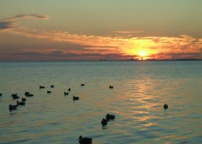 Fish Kabob Bowfishing - Coast Alabama's Only Air-Driven Charter - Duck Hunting